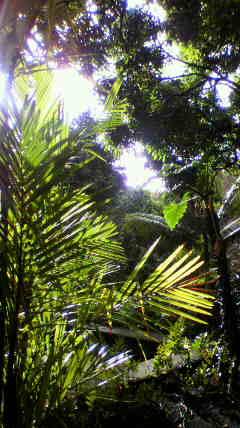 ハワイ島ヒロの朝